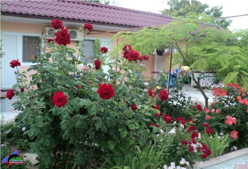 Красивые клумбы из Роз