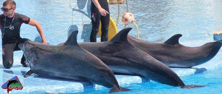 Дельфинарий на мысе Тарханкут
